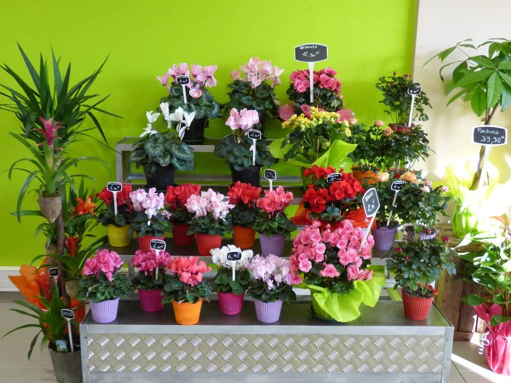 Vente de fleurs clermont ferrand nature et fleurs - Initiatives fleurs et nature ...